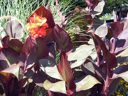 IMG 0835 ©Memories Niagra Canada 